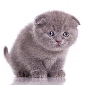 petcare-kittens