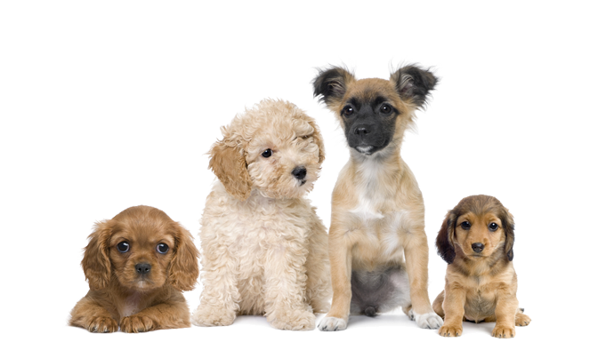 puppy-parties-large
